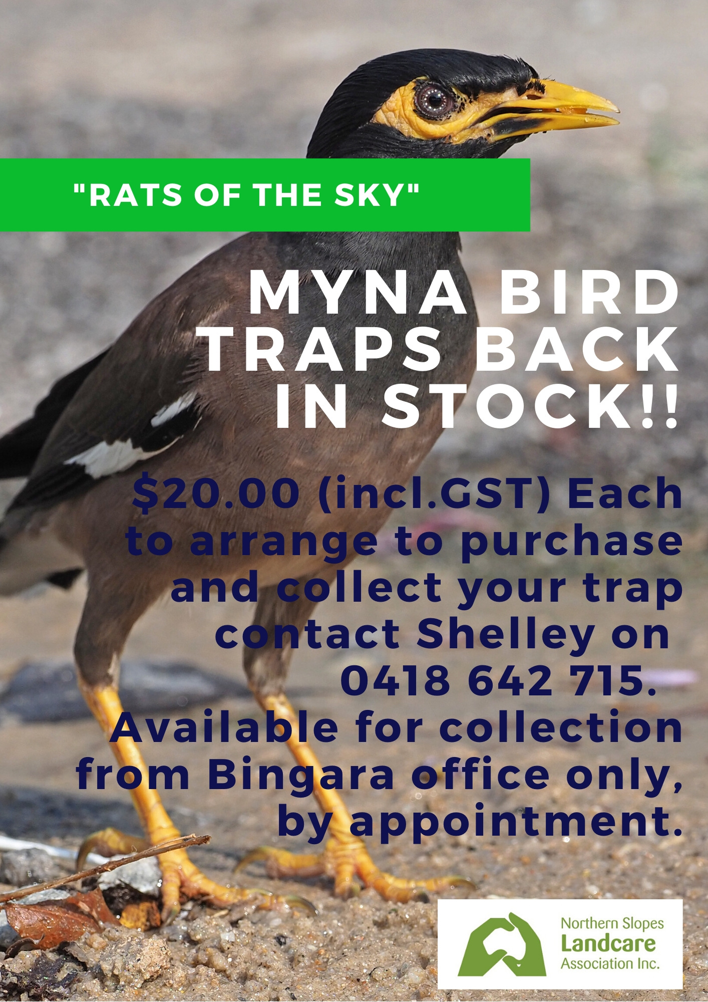Indian Myna Traps now available